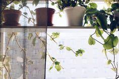 DIY Växthylla för fönster - reaktionista.se