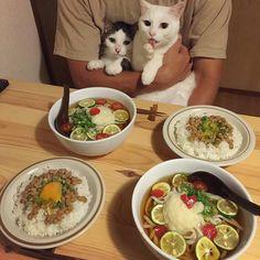 "CAT SALAD | ""Wash your hands before dinner, kids."" | #5 from hamusoku.com"