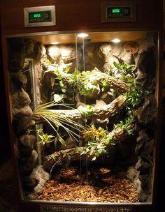 Znalezione obrazy dla zapytania terrarium dla agamy brodatej