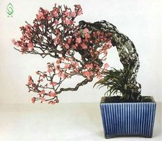 Home Garden Design, Home And Garden, Prunus Mume, Oriental, Mame Bonsai, Ikebana, Beautiful Landscapes, Herbalism, Bloom