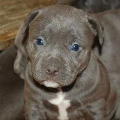 Pitbull....I want another one!!!