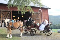 Wedding Carriage, Horse Drawn, Farm Wedding, Special Events, Horses, Horse