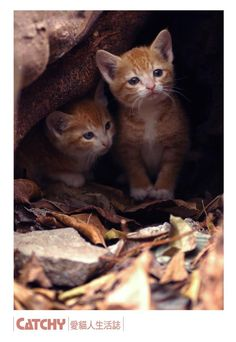 kittens@hongkong