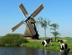 Molinos de viento - Holanda