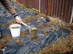 Как подкормить клубнику дрожжами? Сравнительно недавно огородники стали использовать для подкормки клубники дрожжи. Судя по отзывам, результат впечатляющий. Кроме того, это удобрение можно использовать и для других овощей и ягод.    Под…
