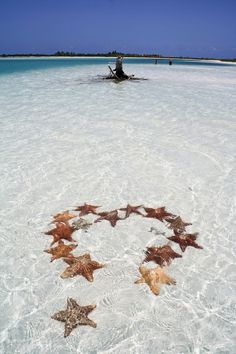 starfish clear waters
