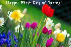 It's officially Spring now! Happy first day of Spring! Facts about the Vernal Equinox