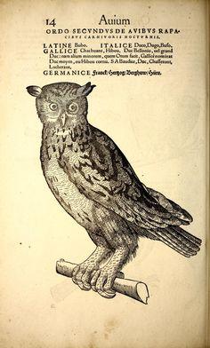 Icones animalium quadrupedum uiuiparorum et ouiparorum : - Biodiversity Heritage Library