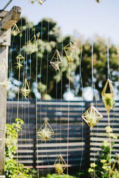 hanging air plants display idea pop shop america