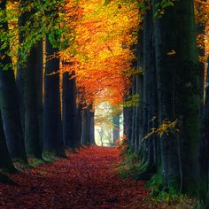 amazing - I would love to take a nice walk in woods like this