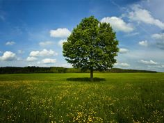 Single Tree Wallpapers - First HD Wallpapers