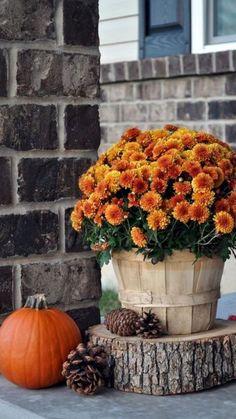 fall decor diy Fall Front Porch - Little Glass Jar Fall Home Decor, Autumn Home, Autumn Fall, Fall Decor Outdoor, Fall Mums, Fall 14, Halloween Veranda, Diy Halloween, Outdoor Halloween