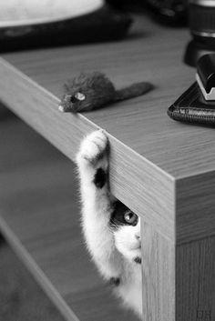 I can juuuust reach it.