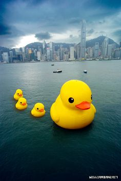 HK harbour - rubber duck parade. Because the world is mad.