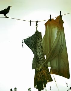 Sweet Vintage Photo of Clothes Line and Black Bird Green And Brown, Olive Green, What A Nice Day, Laundry Lines, Vintage Laundry, Shades Of Green, Hanging Out, Vintage Photos, Boho Chic