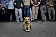 RIP Loukanikos,the riot dog