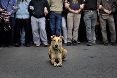 RIP Loukanikos,the riot dog