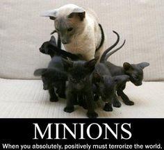 a litter of Basement Cats!
