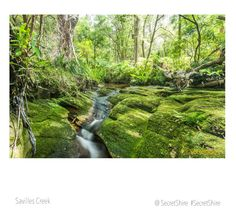 Savilles Creek nature reserve in Kirrawee a suburb in The Sutherland Shire in the south of Sydney Australia.
