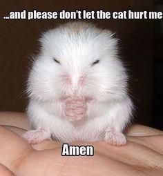 ..Y por favor librame de que el gato me lastime...