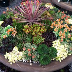 Amazing succulent planter at Rogers Gardens