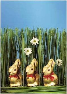 with the this Easter, Last year Lindt donated 000 from Easter sales of the Lindt Gold Bunny to Easter Sale, Easter Bunny, Lindt Gold Bunny, Lindt Chocolate, Helping Hands, Easter Crafts, Mammals, Hamper, South Africa