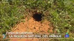 Mostrando miniatura del vídeo españa directo caballos y chozo.wmv Natural, Bird, Outdoor Decor, Plants, Home Decor, Miniature, Horses, Parks, Activities