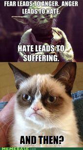 ideas for funny love mems humor grumpy cat Grumpy Cat Quotes, Grump Cat, Funny Grumpy Cat Memes, Cat Jokes, Stupid Funny Memes, Funny Cats, Yoda Funny, Funny Horses, Funniest Memes