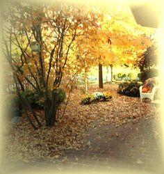 Courtyard Fall