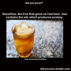 how to make root beer from sassafras
