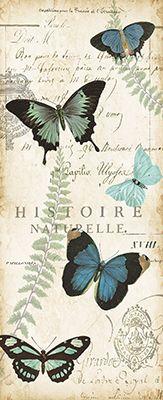 Butterfly.Histoire.Naturelle.02.of.02