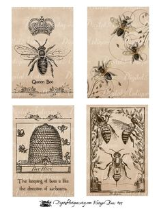 Vintage Bees Printables  -- for Steve of course, maybe cute to paste on rustic wood from his Dad's barn, or mat wtih burlap
