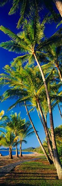 Beautiful Day...Please take me to this tropical place on this beautiful earth!