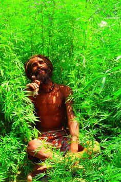 Www.5280mosli.com -Organic Cannabis College-