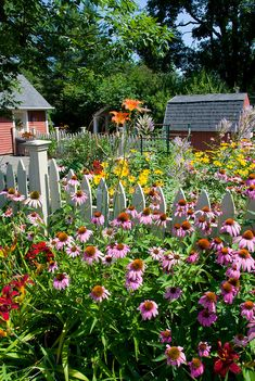 Perennial flower garden in sunny summer backyard