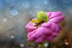 green snail by nordin seruyan