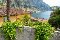 Plants in Limone at Lake Garda (Italy)