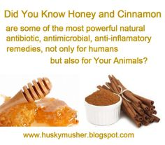 Katerina's Journal: Healing Your Dog Naturally - With Honey And Cinnamon