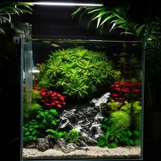 Aquarium Care for the Freshwater Guppy Guppies are maybe the most popular type of freshwater fish to keep in a fish tank. Planted Aquarium, Aquarium Aquascape, Betta Aquarium, Betta Fish Tank, Nature Aquarium, Saltwater Aquarium, Freshwater Aquarium, Reef Aquascaping, Fish Tanks