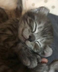 Most adorable Kitty Adorable Cats Cute Kittens Kittens Kitten Videos Cutest Kittens Pets Animals Cute Kittens, Cute Kitten Videos, Cute Kitten Pics, Cute Fat Cats, Cutest Kittens Ever, Kittens Meowing, Fluffy Kittens, Cute Funny Animals, Cute Baby Animals