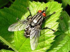 Los insectos y la muerte [http://www.proclamadelcauca.com/2015/05/los-insectos-y-la-muerte.html]