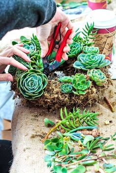 Here's what you need to start creating your very own custom, healthy and gorgeous succulent wreath.