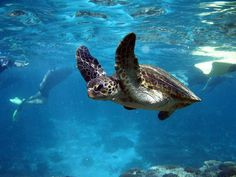 Purely beautiful sea turtles