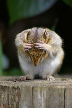 Oh No!!!! .....My nuts!!!!!!!!
