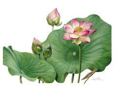 mprg-botanical.jpg 640×480 pixels