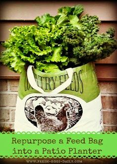 Repurpose a Feed Bag into a Patio Planter