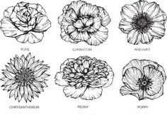 Rose, Carnation, Anemone, Chrysanthemum, Peony and Poppy flowers drawing and sketch with line-art on white backgrounds. - buy this vector on Shutterstock & find other images. Carnation Drawing, Carnation Flower Tattoo, Birth Flower Tattoos, Flower Tattoo Drawings, Poppies Tattoo, Flower Tattoo Designs, Rose Tattoos, Tattoo Sketches, Tattoo Flowers