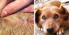 8 techniques infaillibles pour détecter et éliminer les puces de votre chien