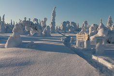 Riisitunturi National is situated in the southern part of Finnish Lapland near the city of Posio. The park covers an area of 77 square kilometers. Places Around The World, Around The Worlds, I Want To Travel, Winter Beauty, Winter Trees, Round Trip, Hiking Trails, Cool Photos, Amazing Photos