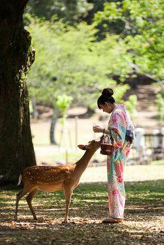 Donning a beautiful kimono, under a 100 year old tree. Nara Park, Japan